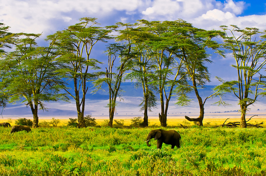Ngorongoro Crater Conservation Area в Танзании
